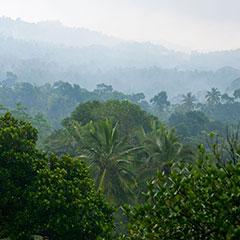 Rainforest Canopy View