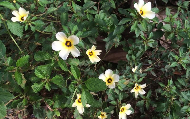 Yellow Ground Flower