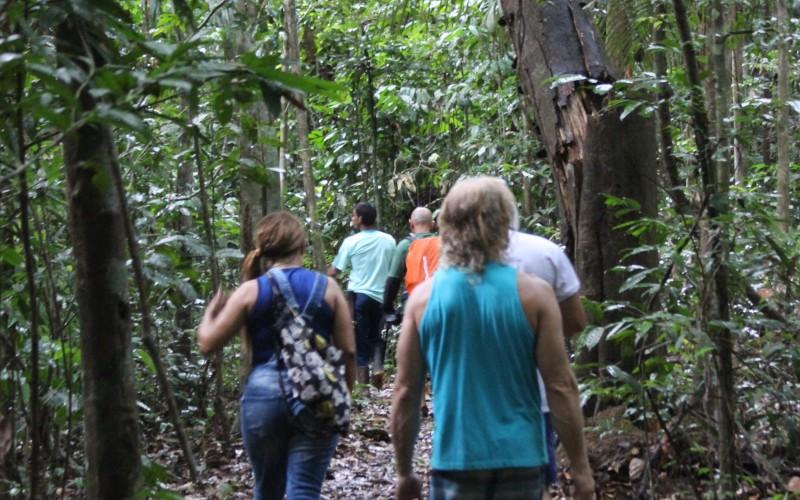 Big Tree Trails Hike