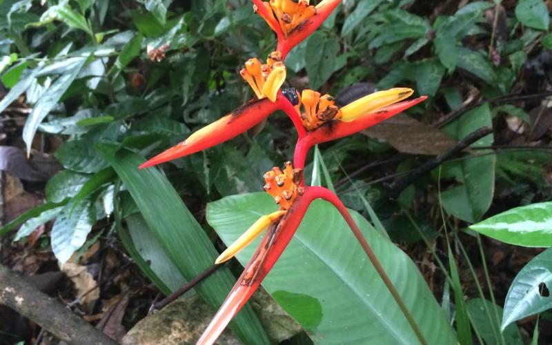Orange Rainforest Flower