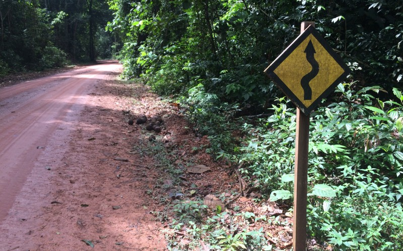 Tapajos Rainforest Winding Road Sign