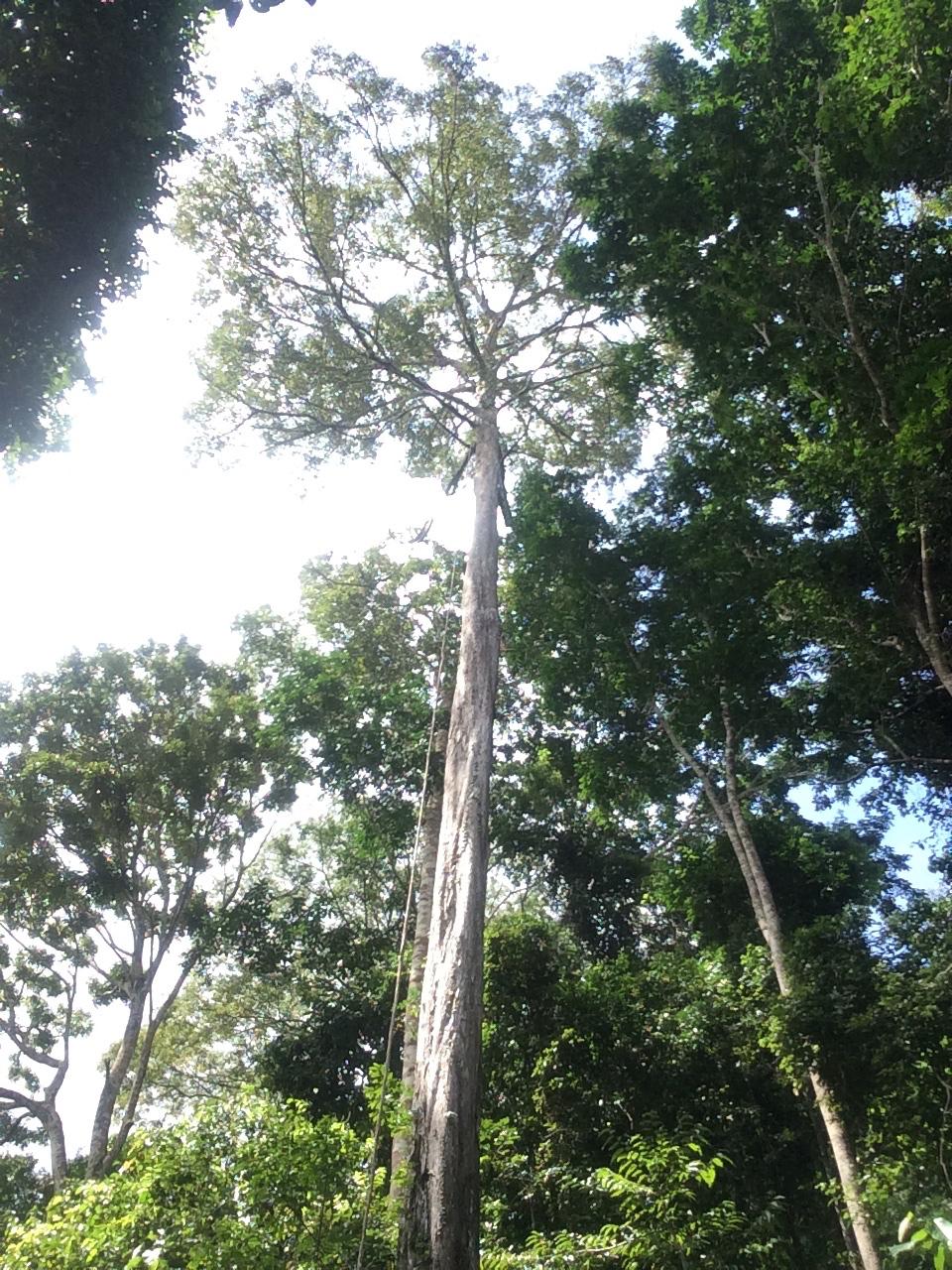 Rainforest Vine Climbing