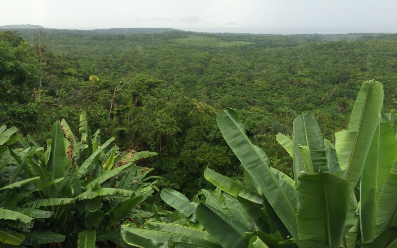 Rainforest Tapajos River Overlook