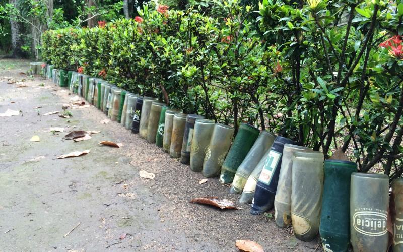 Belterra Rainforest Garden Border
