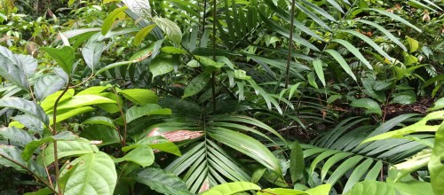 rain forest foliage