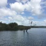 Santarem Area Shore Wildlife