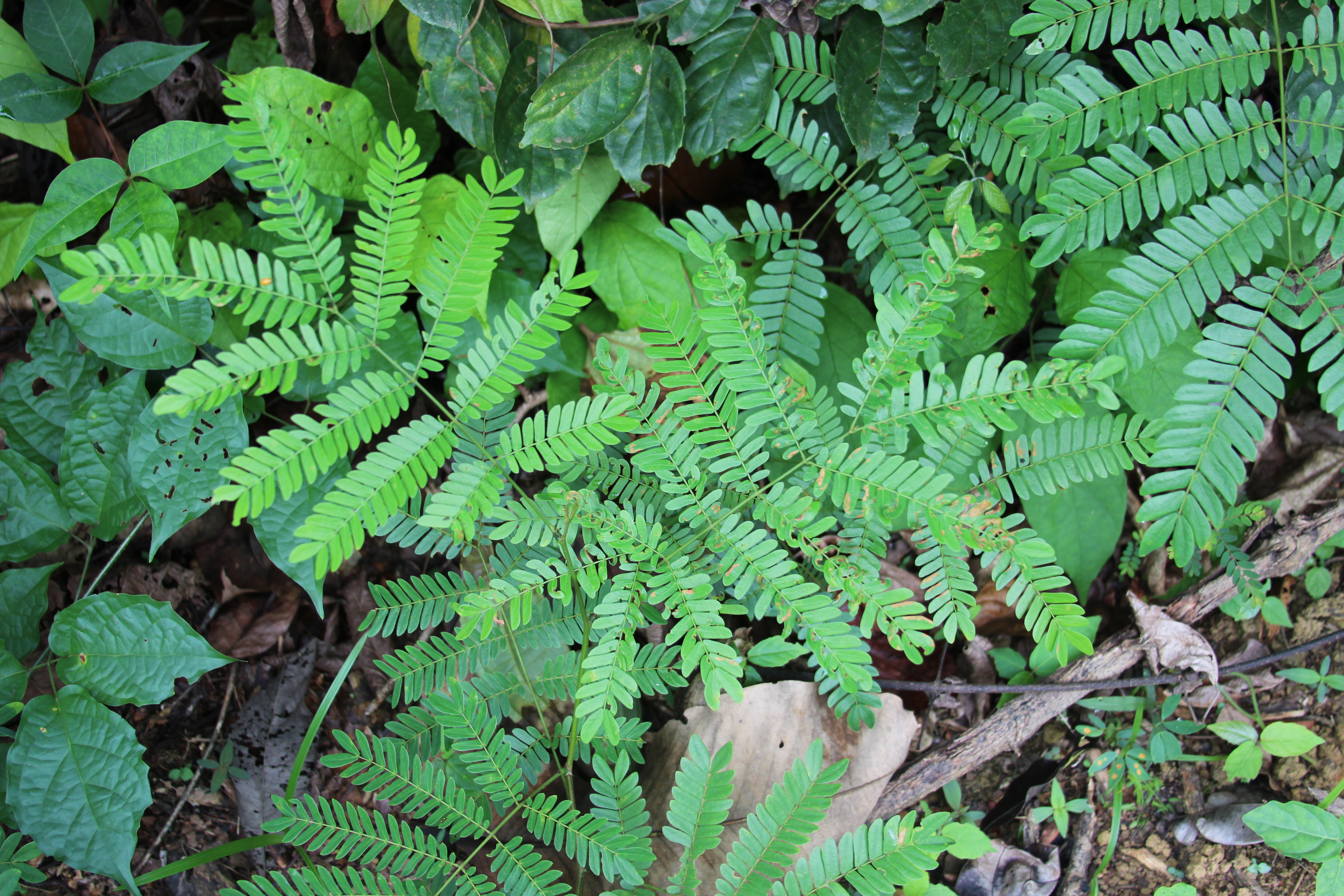 Rainforest Ground Foliage