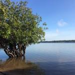 Tapajos River Lagoon