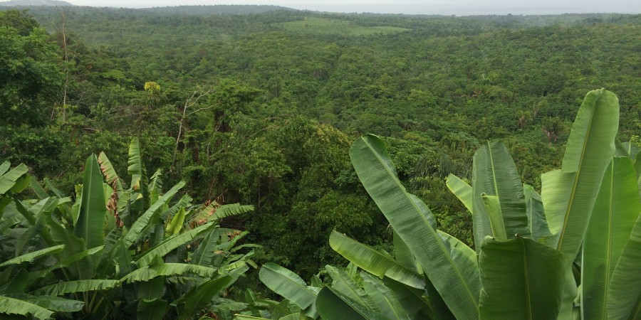 Rainforest Tapajos River View