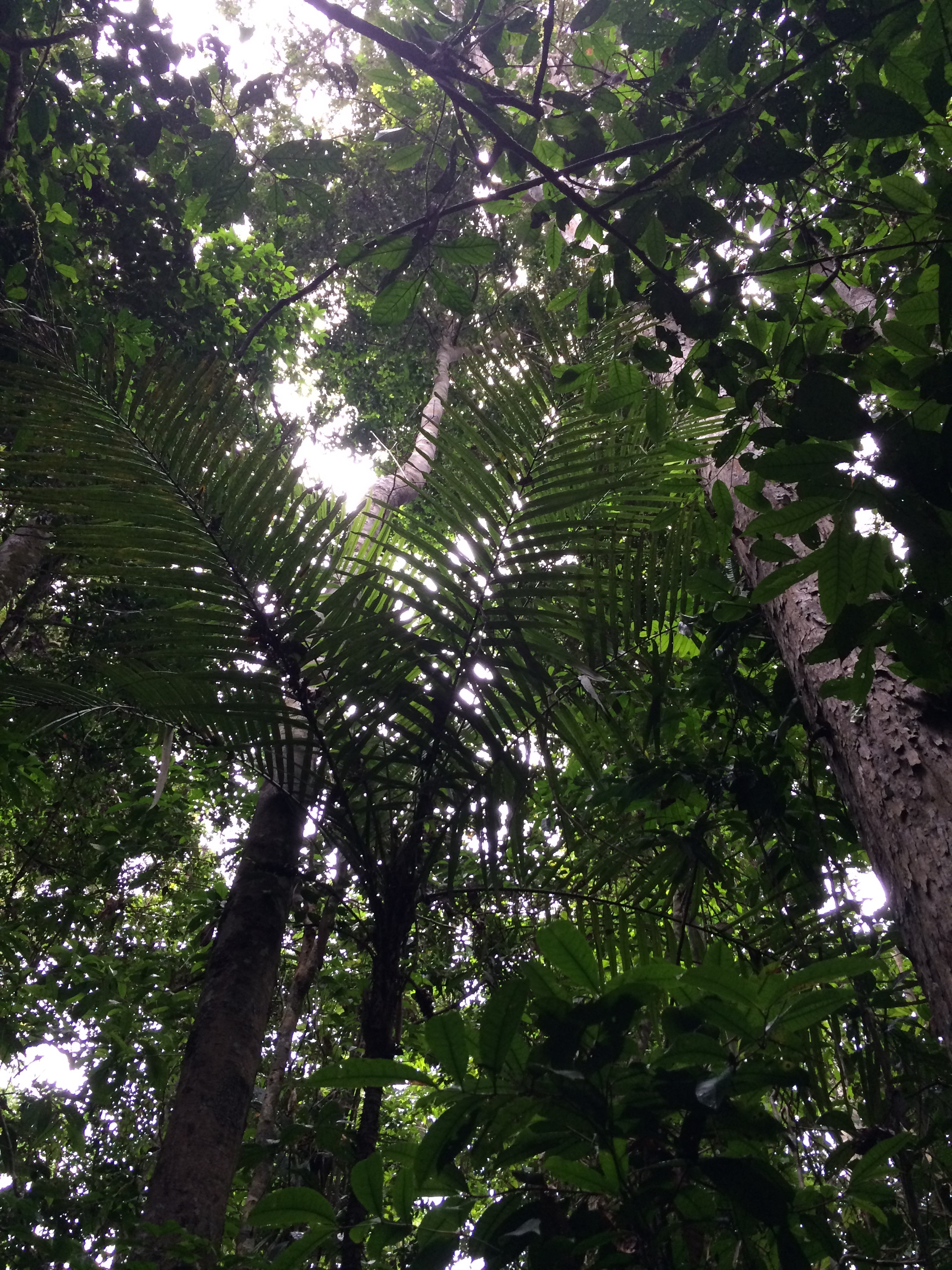 Canopy Above Rainforest Lots for Sale