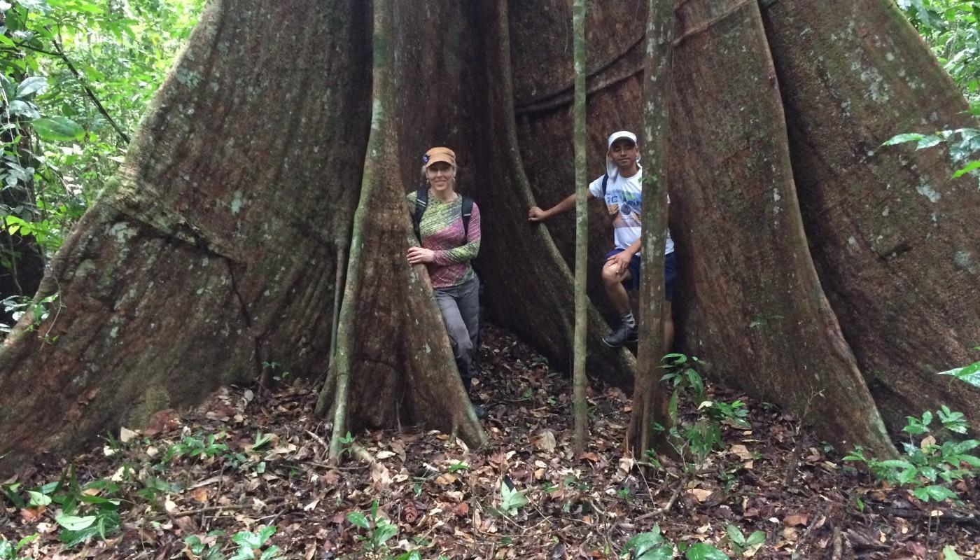 Roots of Giant Tauari Tree